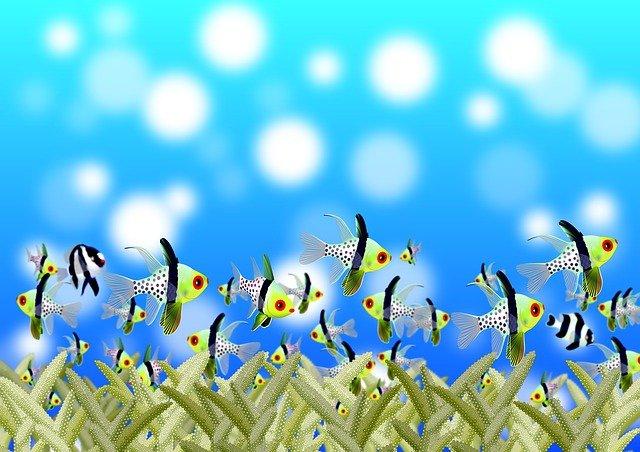 barevné rybičky