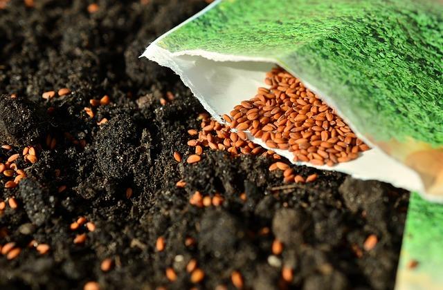 sázení semínek do půdy.jpg